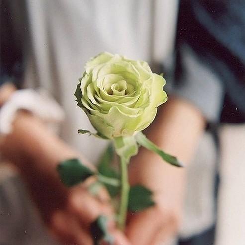 情侣 头像 霸气 背影手里面拿着玫瑰花展示图片